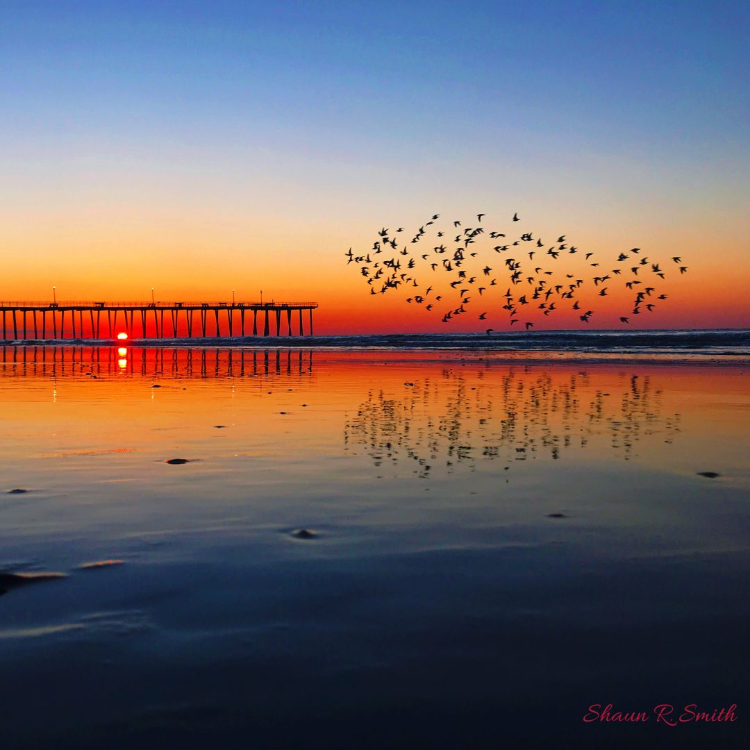 Ventnor Pier Sunrise With Flying Pipers - Shaun R Smith